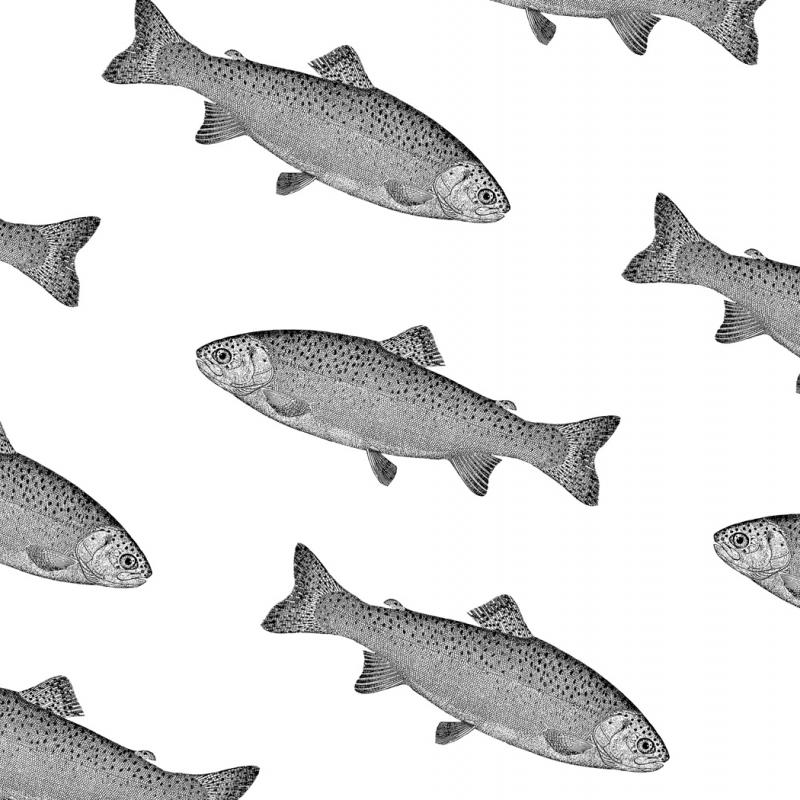 Lorem ipsum - риба для дизайнера
